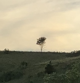 Tree on a Ridge